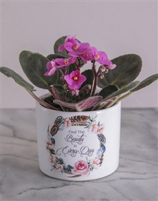 gifts: Beauty in Every Day African Violet!