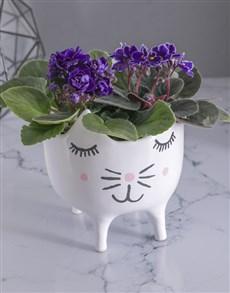 plants: African Violets in Cat Pot!