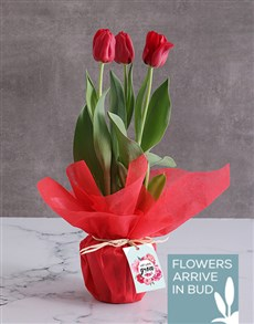 flowers: Red Love Tulips!