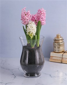 flowers: Hyacinths in a Hurricane Vase!