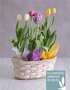 flowers: Tricolour Tulips in a White Wicker Basket!