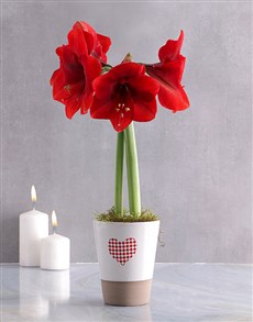 flowers: Red Amaryllis in Heart Pot!