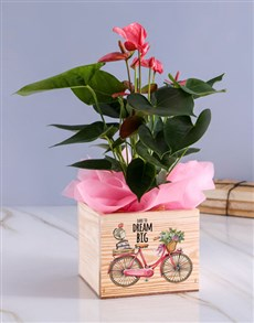 flowers: Dream Big Anthurium Plant!
