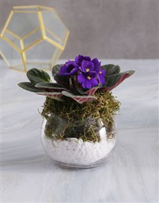flowers: Pixie Land African Violet!