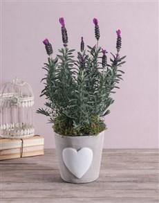 plants: Loving Lavender in Ceramic!
