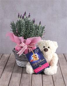 gifts: Teddy Bear Lavender Basket!
