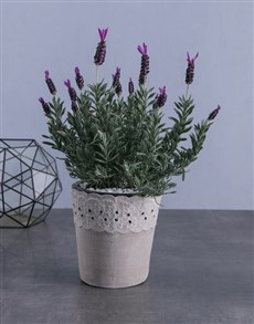 gifts: Lavender in Paper Lace!
