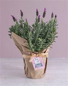 gifts: Appreciative Lavender Pot!