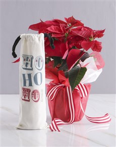 flowers: Festive Poinsettia with Red Wine!