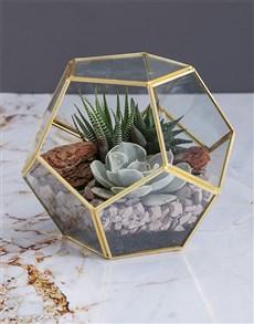 flowers: Succulent in a Gold Geo Terrarium!