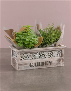 plants: Potted Basil And Thyme!