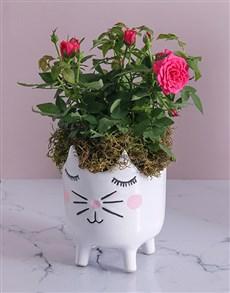 plants: Rose Bush in Kitty Vase !