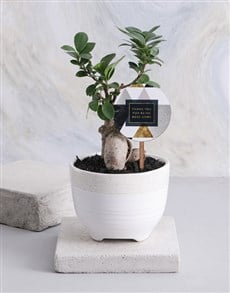gifts: Bosses Day Bonsai in a Speckled Pot!