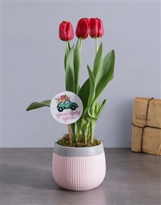 gifts: Red Tulips in Pink and Grey Pot!