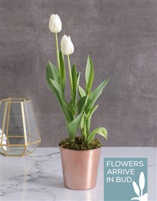 gifts: White Tulips in Cleo Pot!