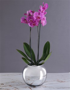 flowers: Fortune Tellers Orchid Pot!