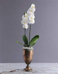 flowers: The Orchid Chalice!