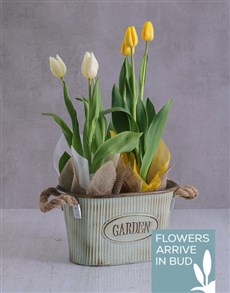 flowers: Tulip Duo in a Meadow Planter!