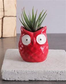 flowers: Teachers Owl Succulent Pot!