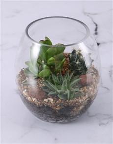 plants: Large Succulent Fish Bowl Terrarium!