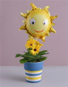 gifts: Sunshine Gerbera Plant!