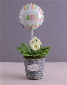 flowers: Welcome Baby Gerbera Plant in a Basket!