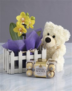 gifts: Midi Orchid Picket Fence Bundle!