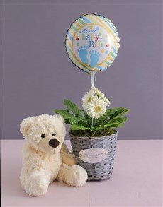 flowers: Baby Boy Gerbera Plant in a Basket!