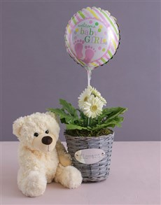 flowers: Baby Girl Gerbera Plant in a Basket!