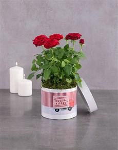 flowers: Variety Rose Bush!