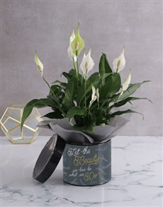 flowers: Golden Beauty Lily Plant In Hatbox!