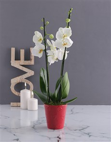 gifts: White Orchid Love!