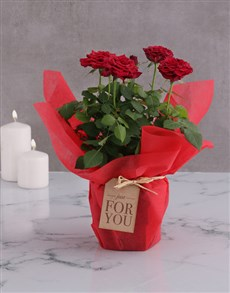flowers: Red Rose Bush Just For You!