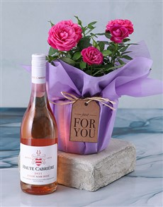 plants: Cerise Rose Bush In Purple Wrap!