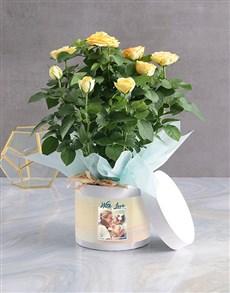 gifts: Yellow Rose Bush Arrangement!