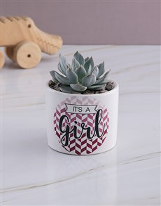 plants: Welcome Baby Succulent In White Ceramic Pot!