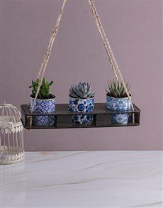 gifts: Set Of Three Succulents In Delft Tin!