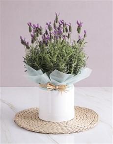 flowers: Lavender Birthday Box!