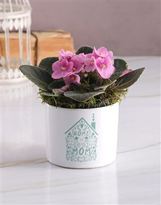 flowers: Heart At Home African Violet!