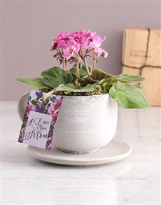 flowers: Love African Violet In A Teacup!