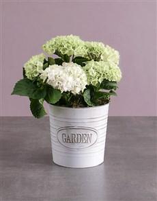 flowers: Hydrangea Meadow Arrangement!