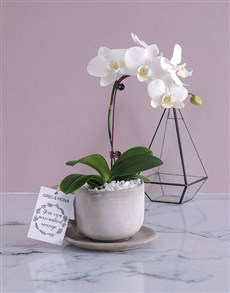 plants: Personalised Orchids In A Pot!