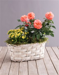 gifts: Orange Rose and Yellow Kalanchoe Basket!