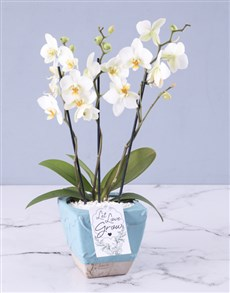 plants: Orchids In A Pot!