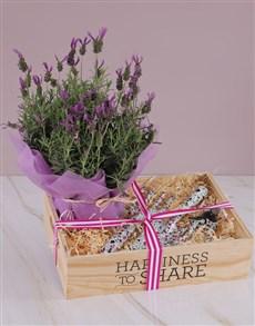 flowers: Gardening Kit Lavender Combo!