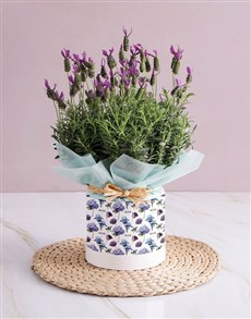 flowers: For You Lavender!