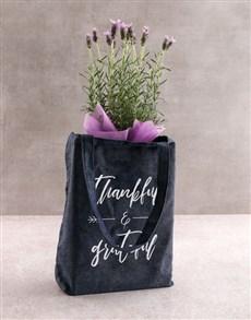 gifts: Radiant Lavender Delights!