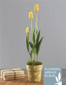 flowers: Yellow Polka Dot Tulip Plant!