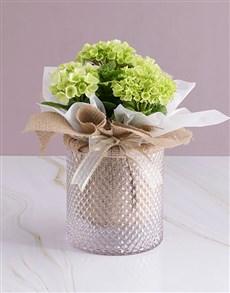 flowers: White Hydrangea Hessian Arrangement!