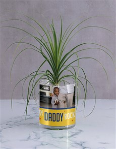 flowers: Personalised Daddy Rocks Ponytail Palm!